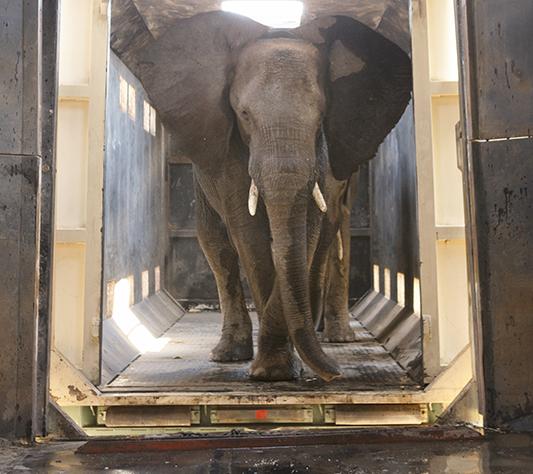 shareduniverseafrica_elephant