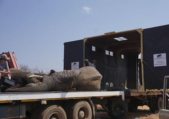 suf_relocation_elephants_7